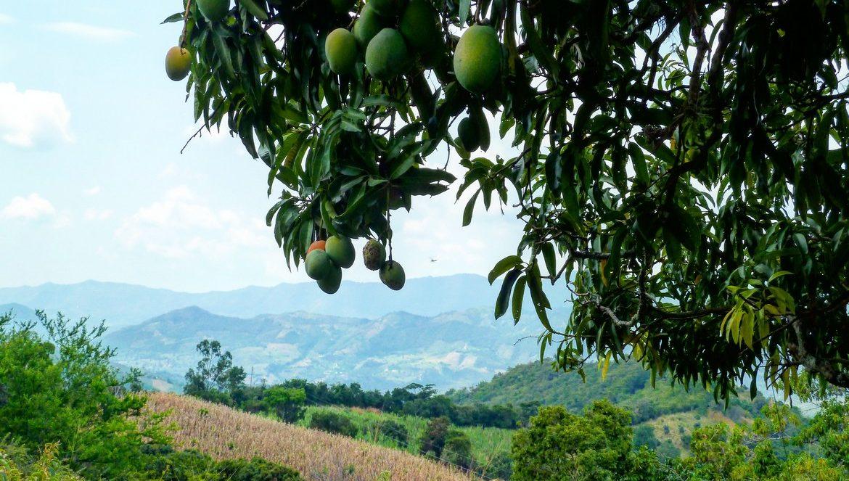 Mango route