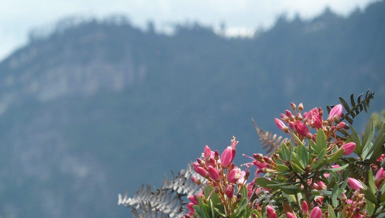 Parque Naturel Chicaque