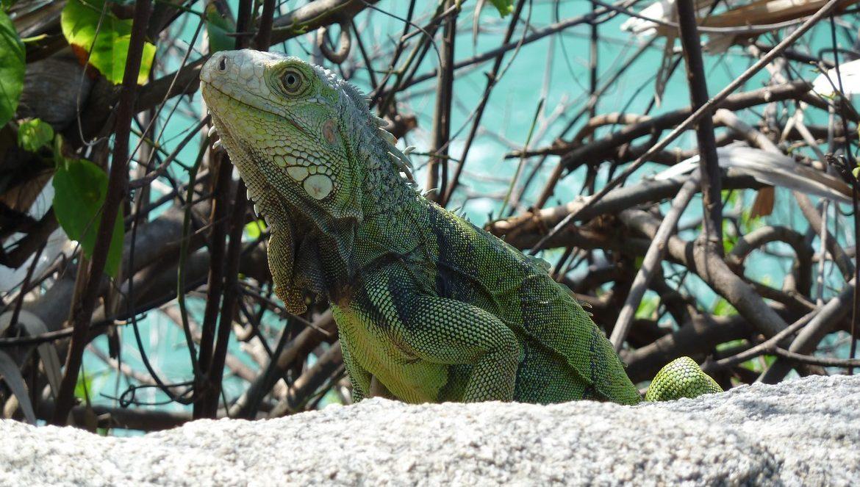 Parque Tayrona: flora en fauna