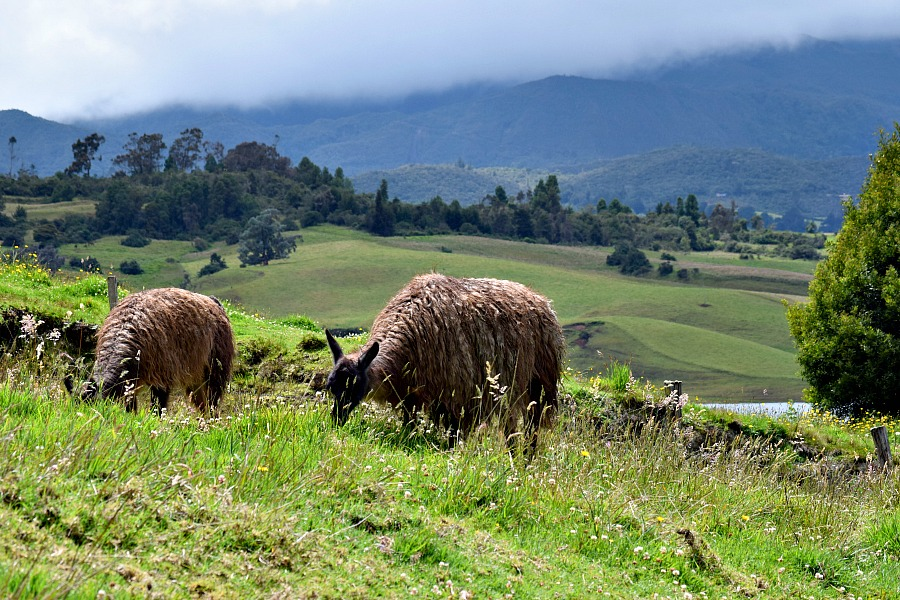 Colombia off the beaten track: lama's