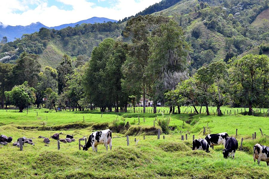 Dieren op de boerderij Colombia