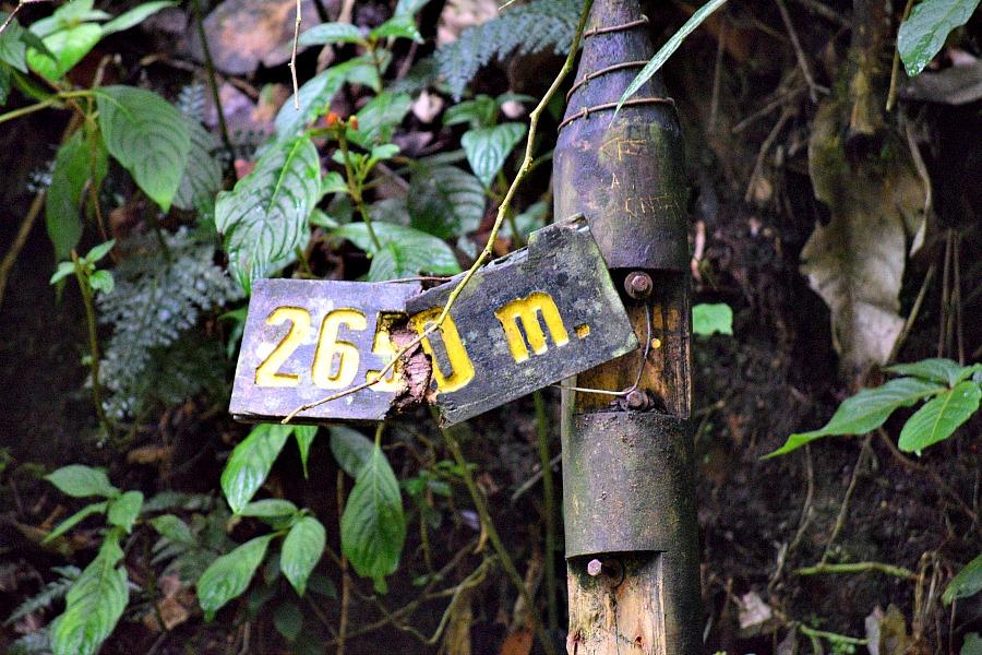 Hiken in Valle de Cocora Colombia
