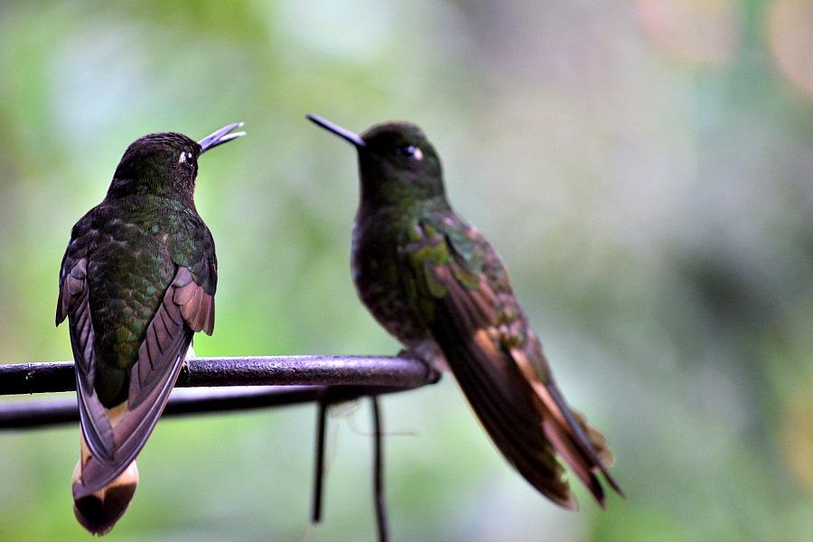 Casa de colibri valle de cocora Colombia