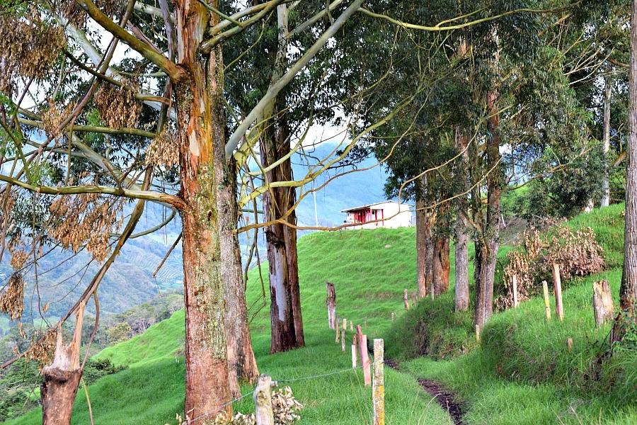 Wandelen in Zona Cafetera Colombia