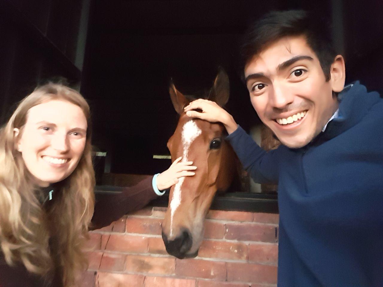 Dol op paarden