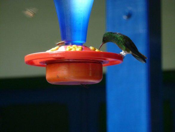 Zona Cafetera kolibrie