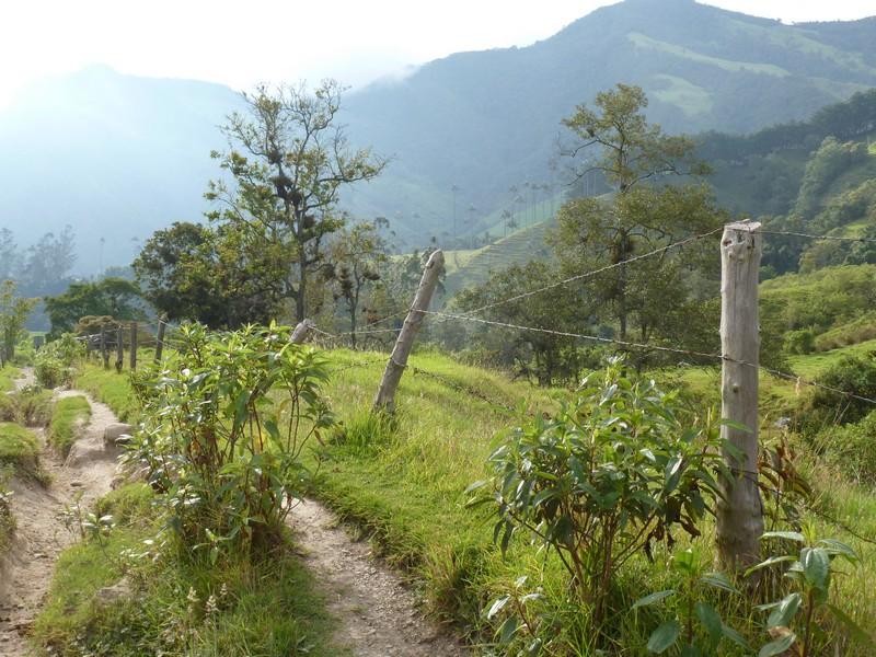 Zona Cafetera (koffiegebied) - Valle de Cocora