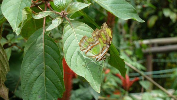Zona Cafetera (koffiegebied) - Botanische tuin
