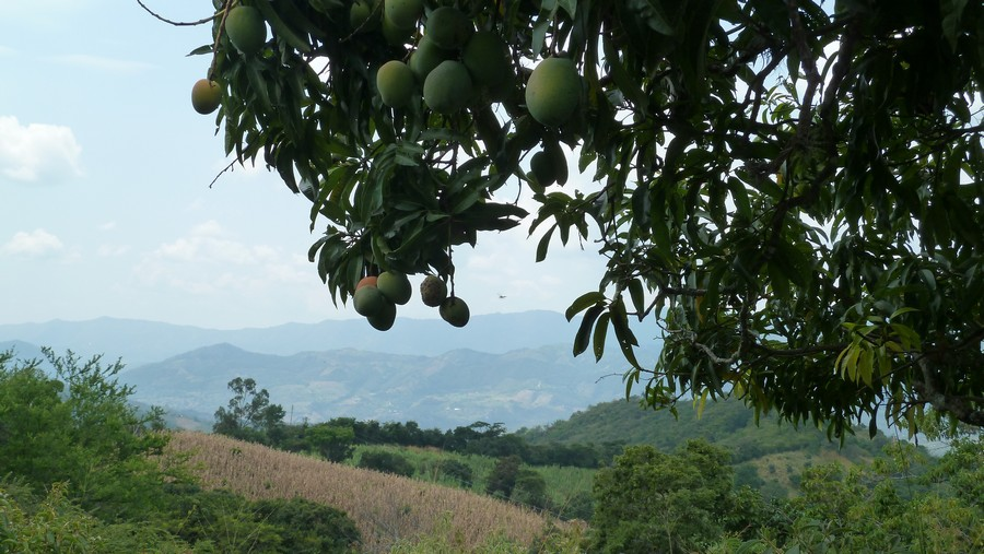Mango's in Colombia