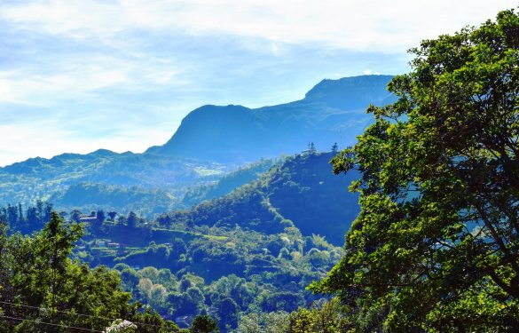 Flora en fauna Colombia