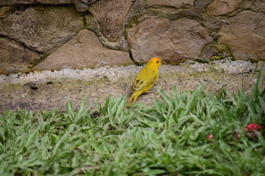 Colombia - kolibrie - fotografie - Jardín Encantado