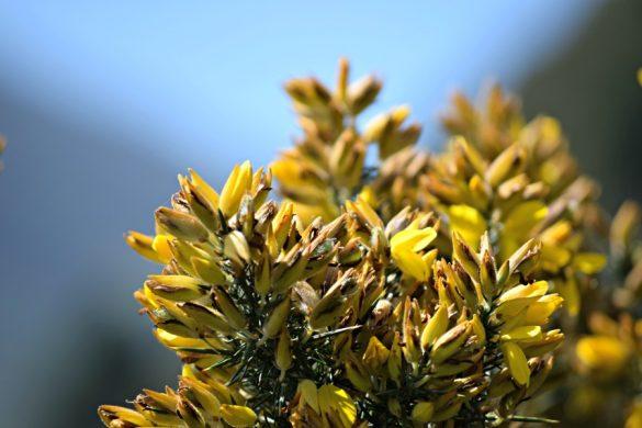 Het meer van Neusa: Flora en Fauna