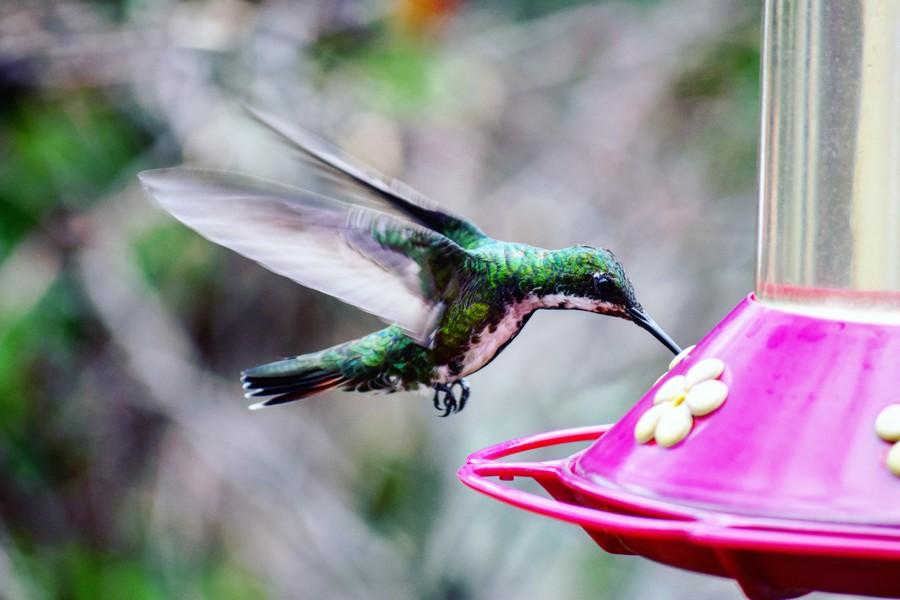 Instagram favorieten juni - Colombia kolibrie