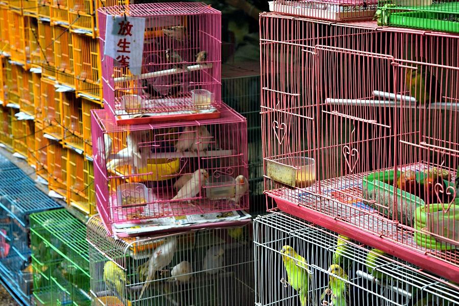 Markten in Hong Kong: Vogelmarkt