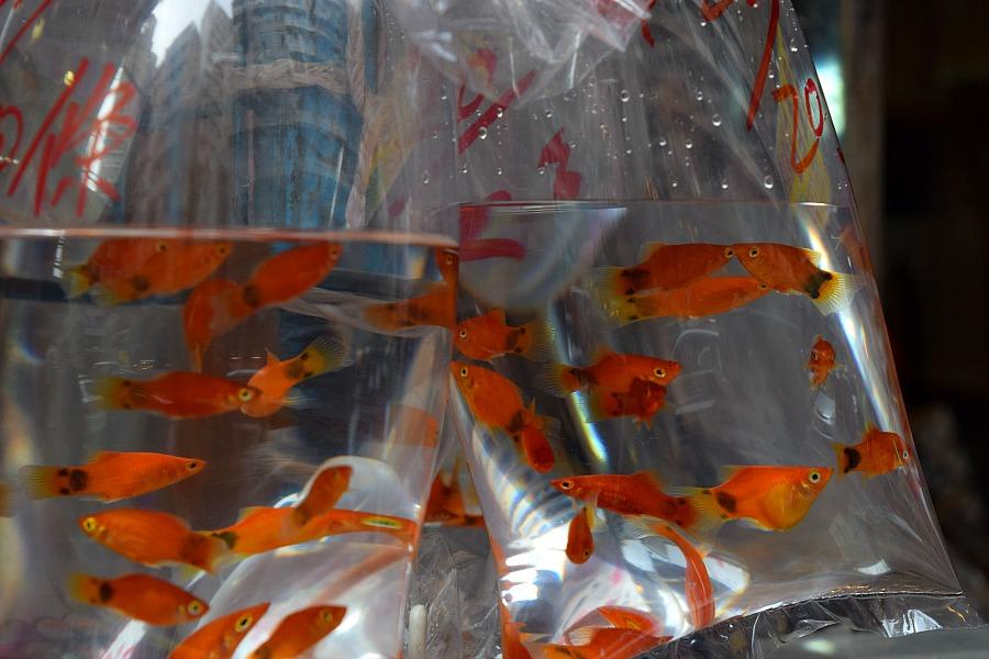 Markten in Hong Kong: vismarkt