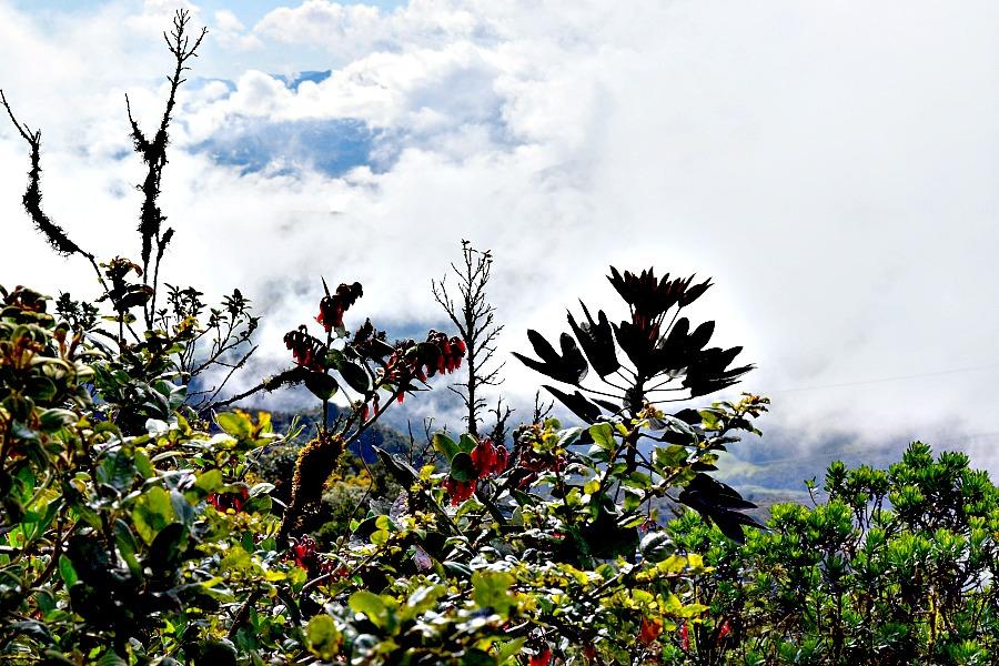 Colombia páramo natuur roadtrip