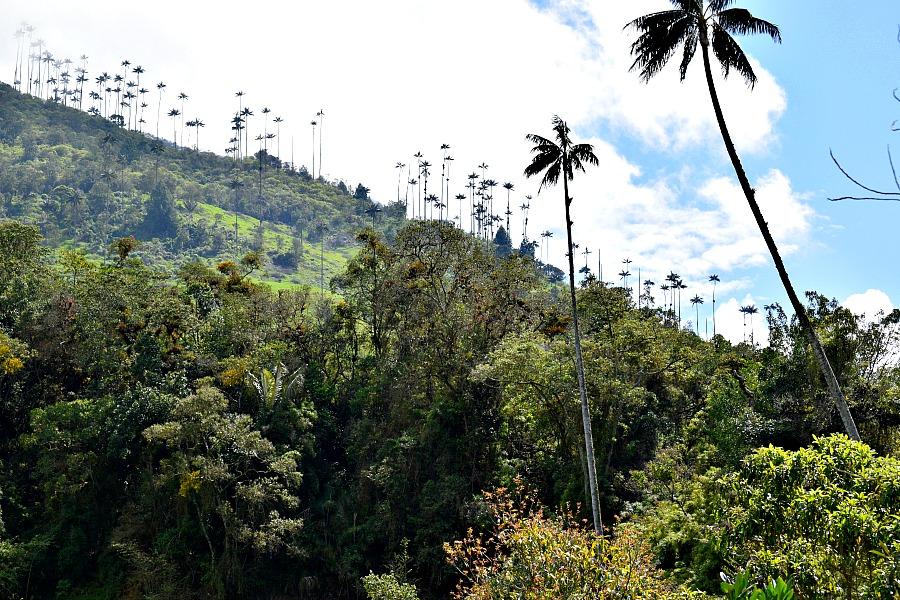 Wandelen in Valle de Cocora Colombia