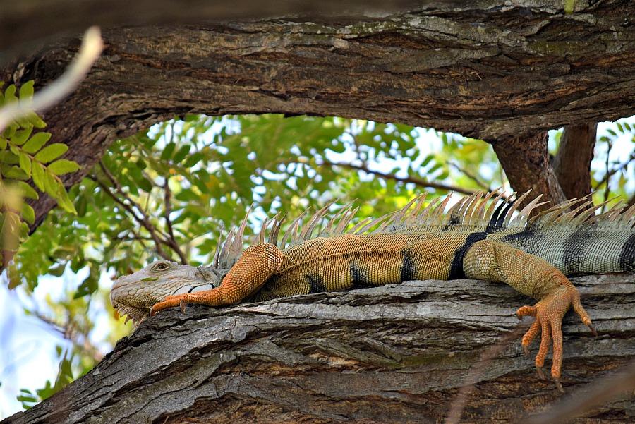 5 tips om te doen in Cartagena: parken en leguanen