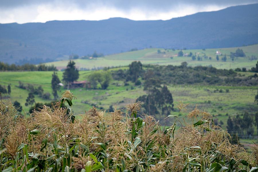 Toca - Boyacá - Colombia