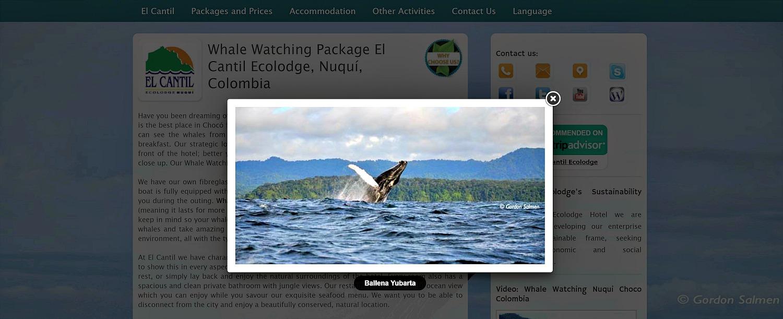 Walvissen spotten Colombia