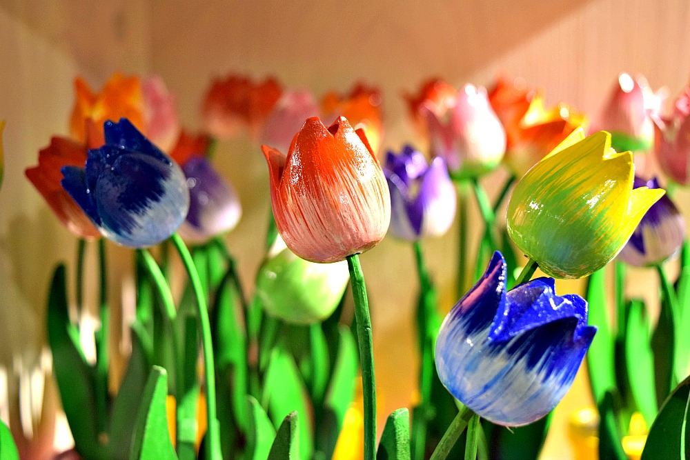 Waarom Nederland zo leuk is - Tulpen