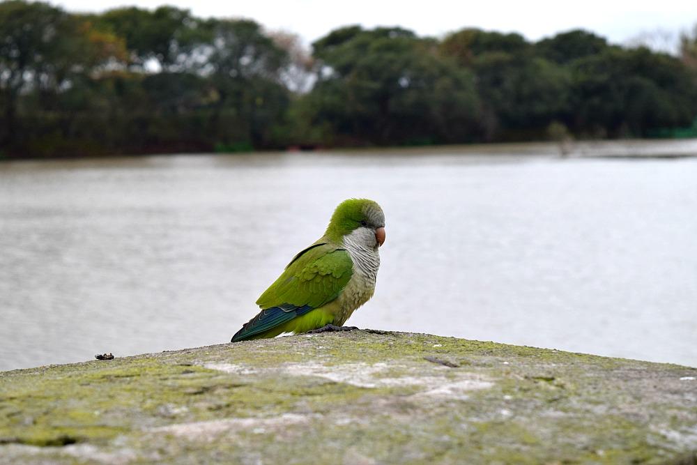 Parken in Buenos Aires - Reserva Ecológico