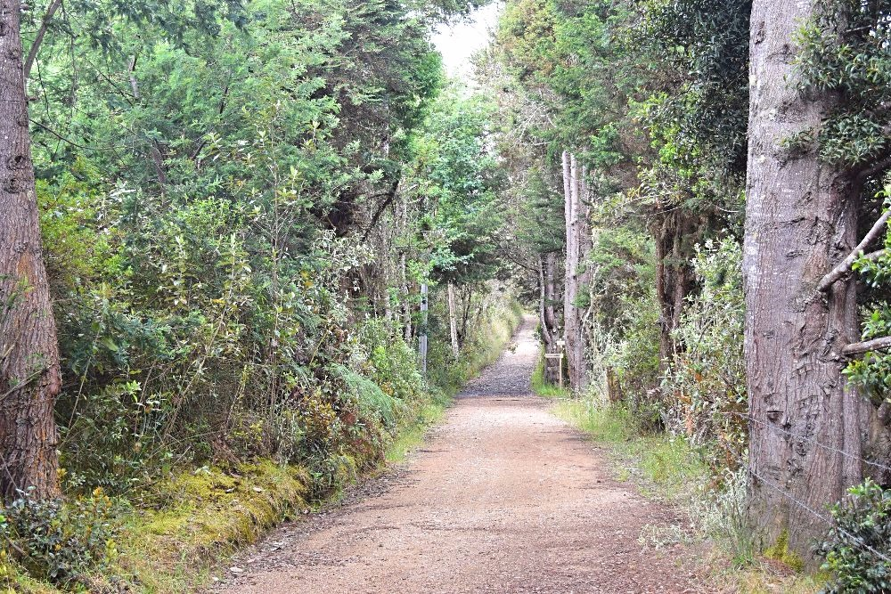 Buiten de gebaande paden Colombia wandelen - Parque Pionono