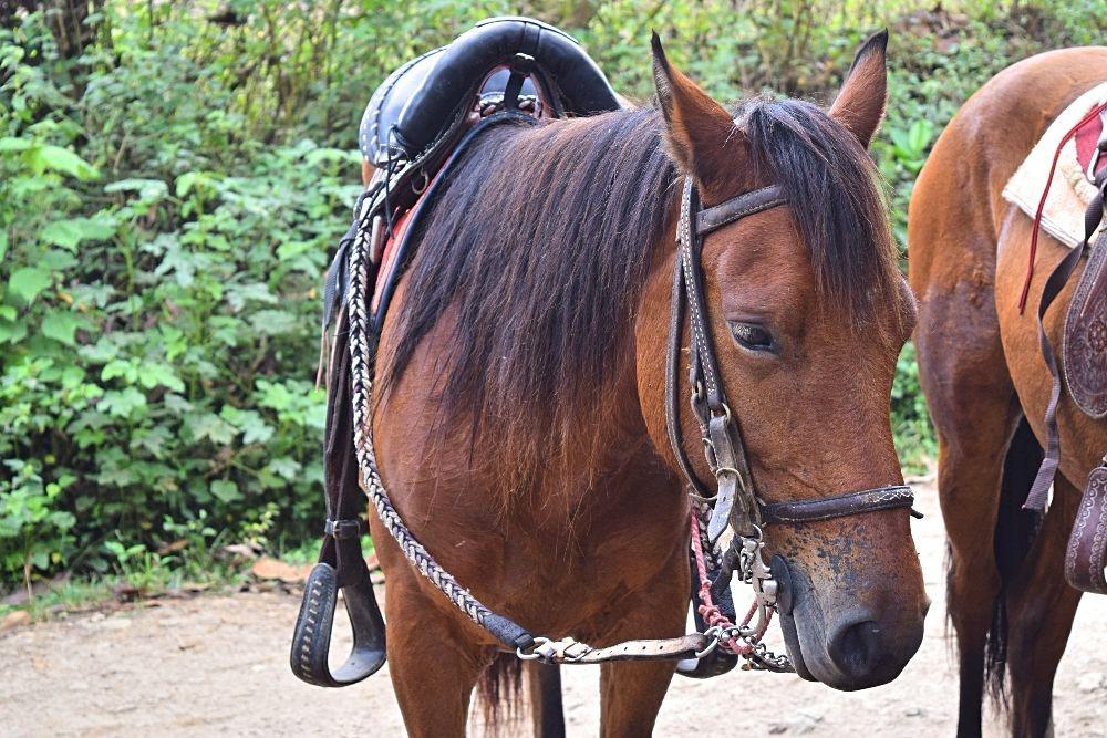 Paardrijden in Colombia - San Agustín