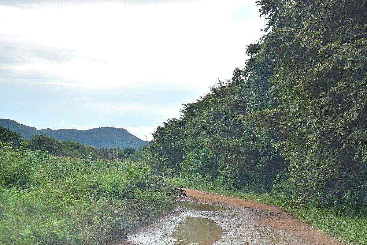 Avontuurlijke route naar Tatacoa woestijn Colombia