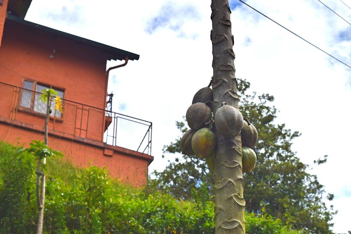 Wandelen in Colombia - Sopó