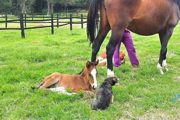 Een oudere hond adopteren: het verhaal van Juaco