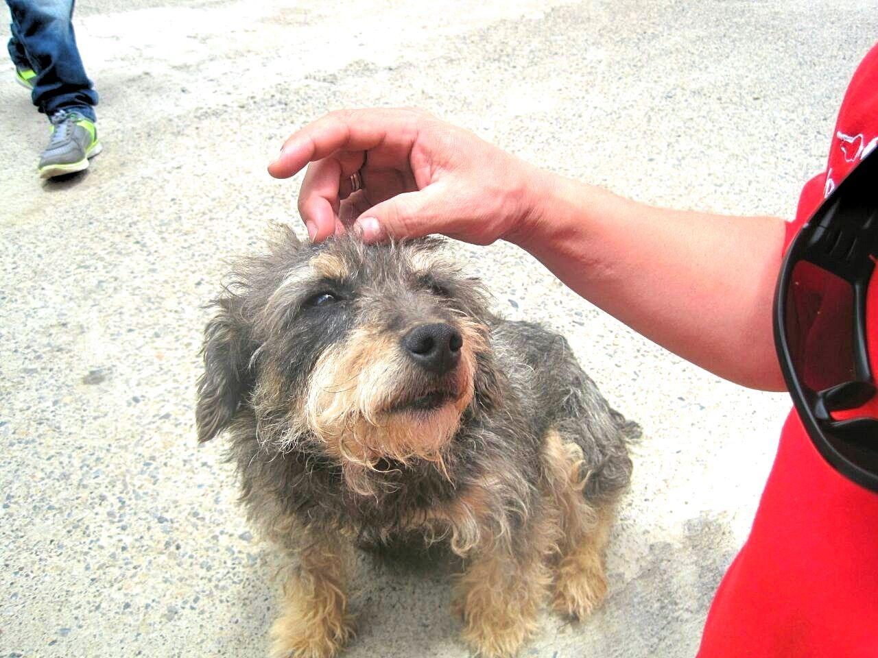 Een oudere hond adopteren - verhaal van Juaco