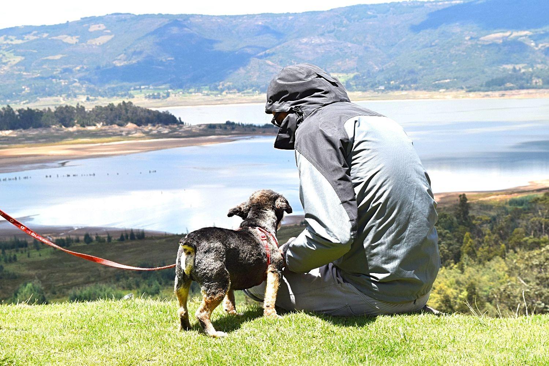 Een oudere hond adopteren - verhaal van Juaco - featured