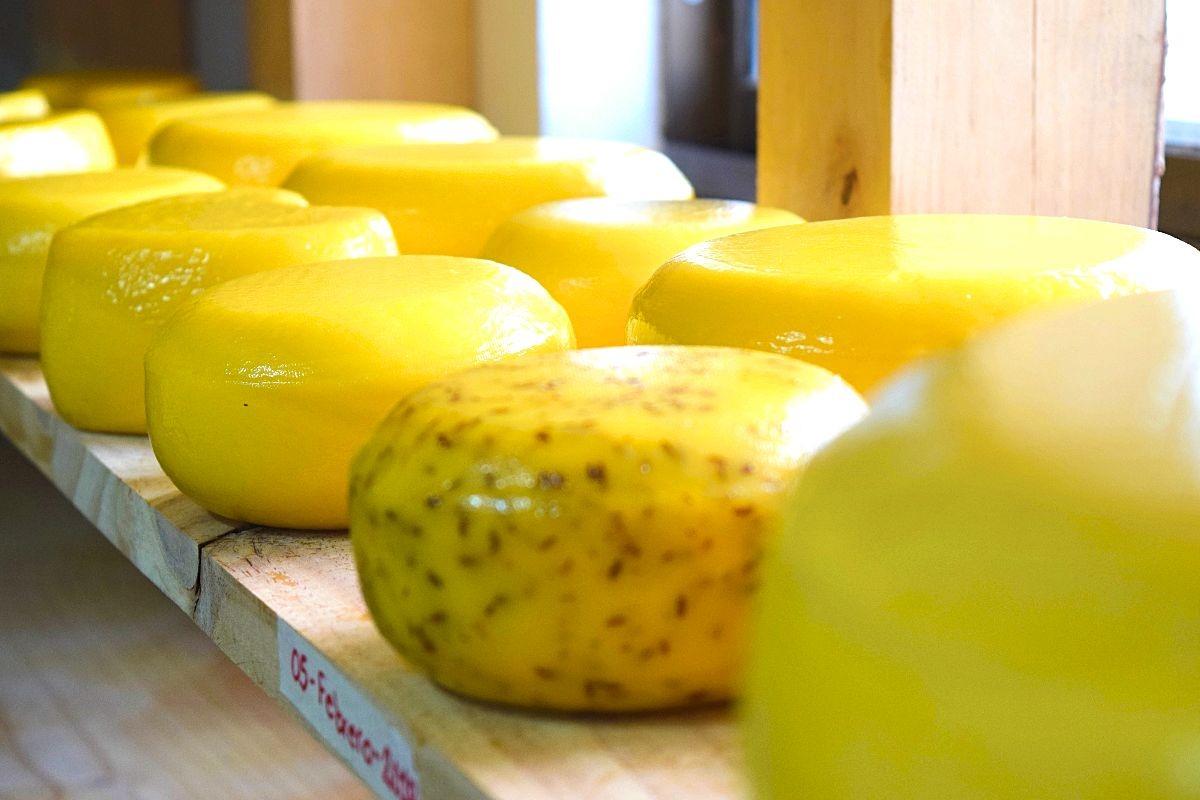 Nederlandse kaas makerij Colombia
