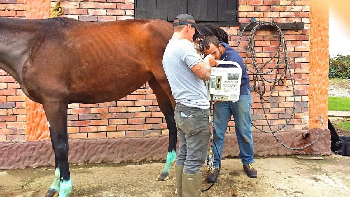 Inwendig onderzoek paard