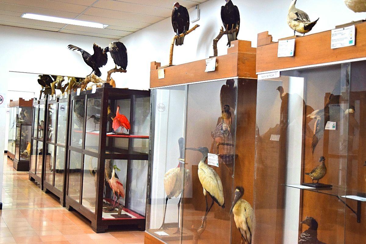 Natuurhistorisch museum Popayán Colombia
