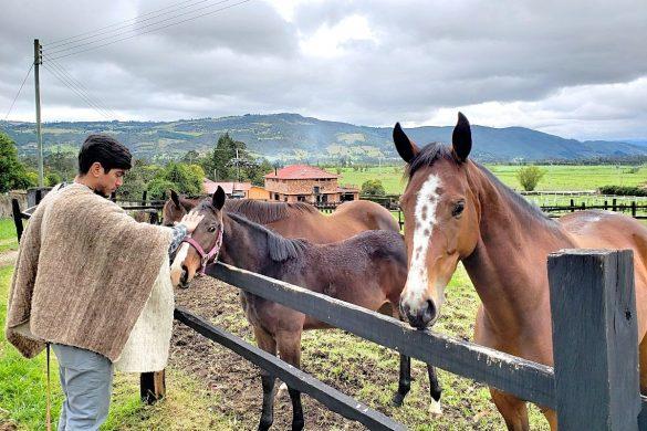 Bij de paarden