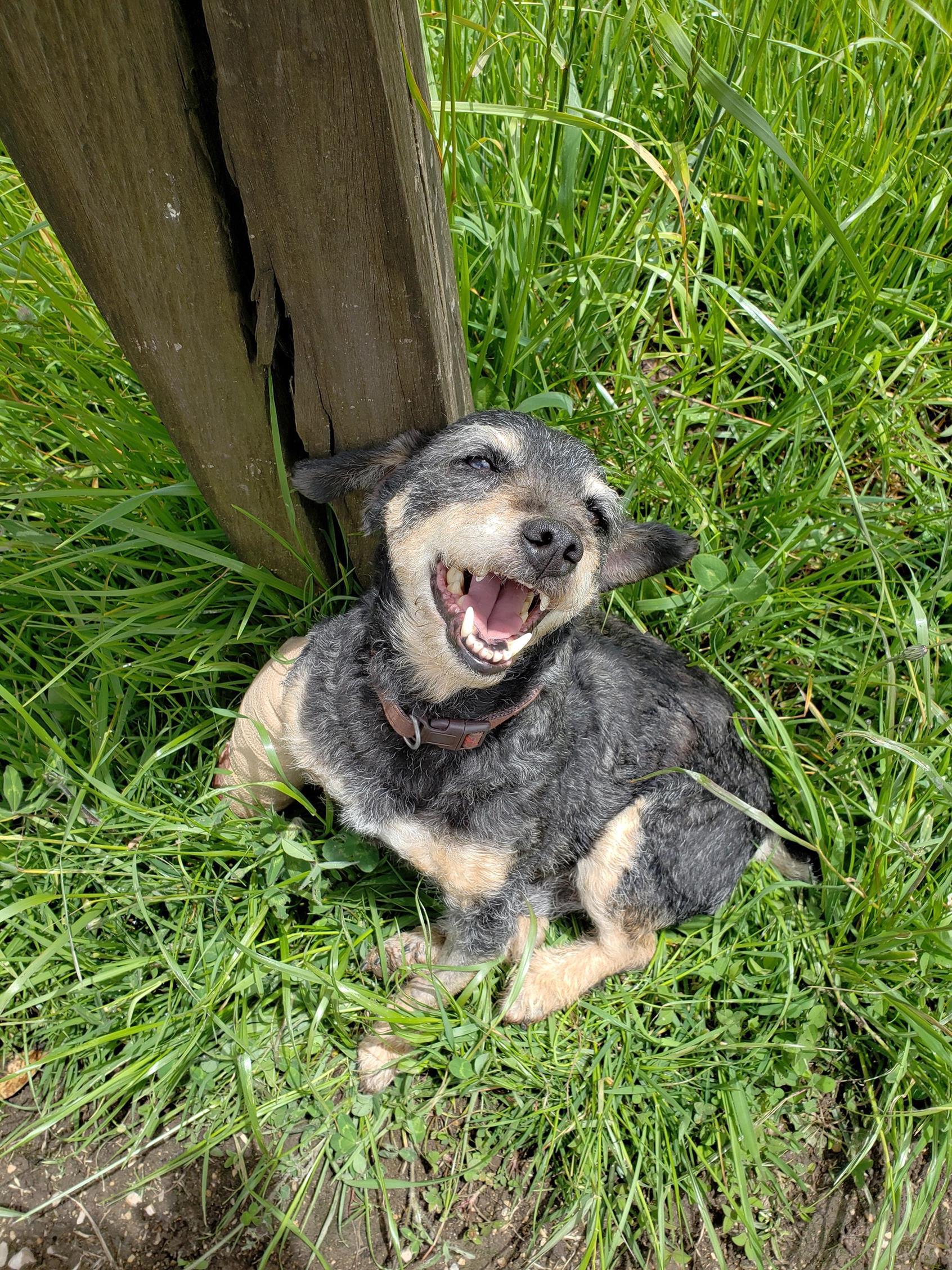 Hond is gelukkig