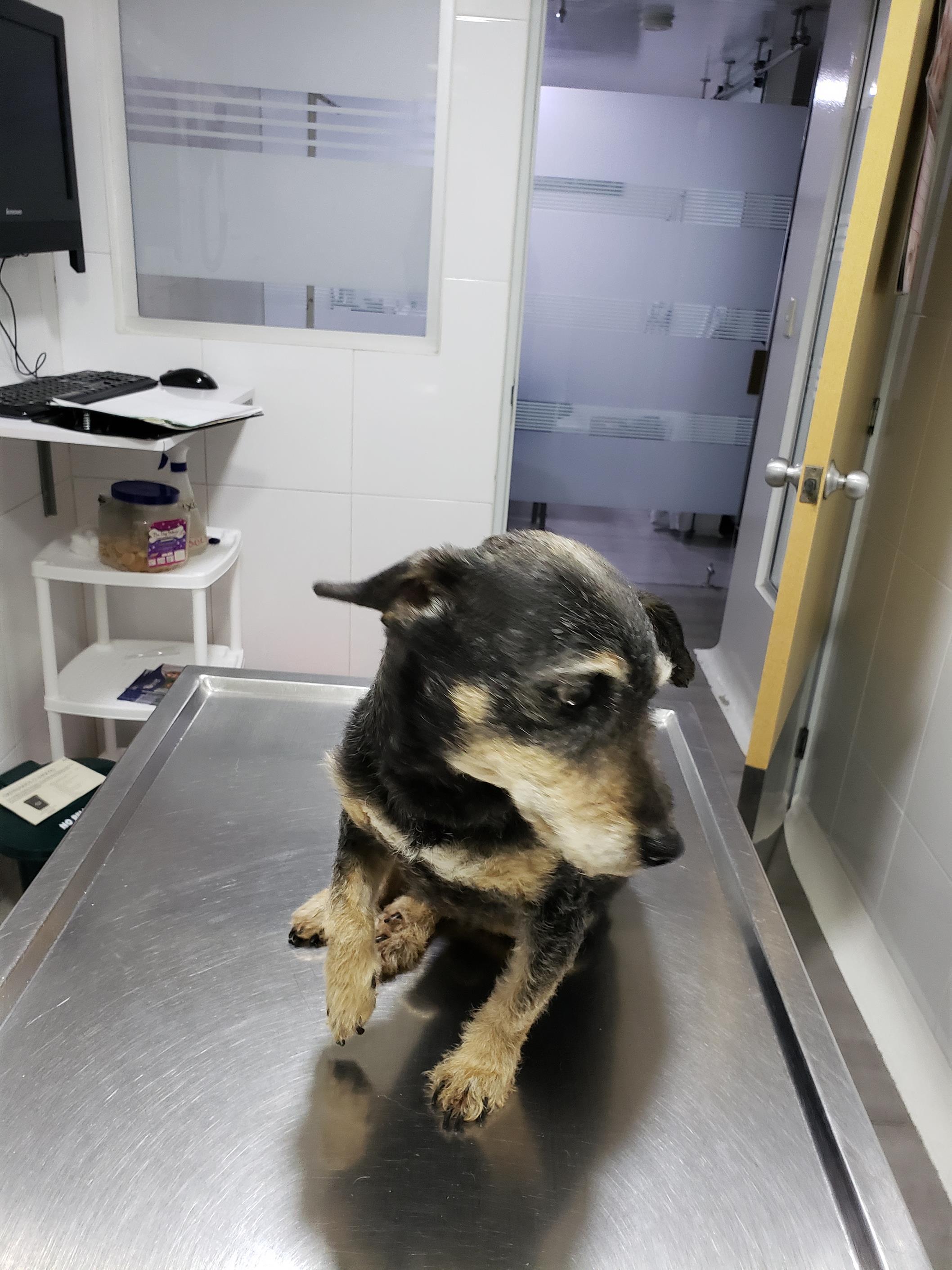 Hond naar de orthopeed