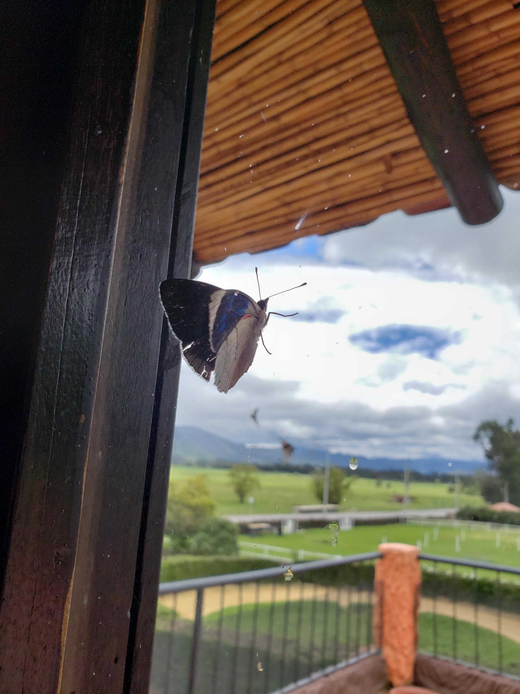Vlinder in huis