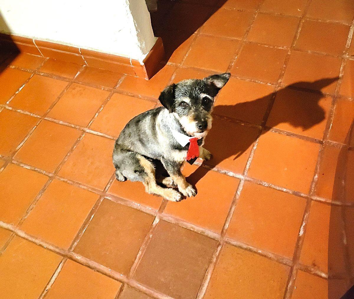 Hond met stropdas