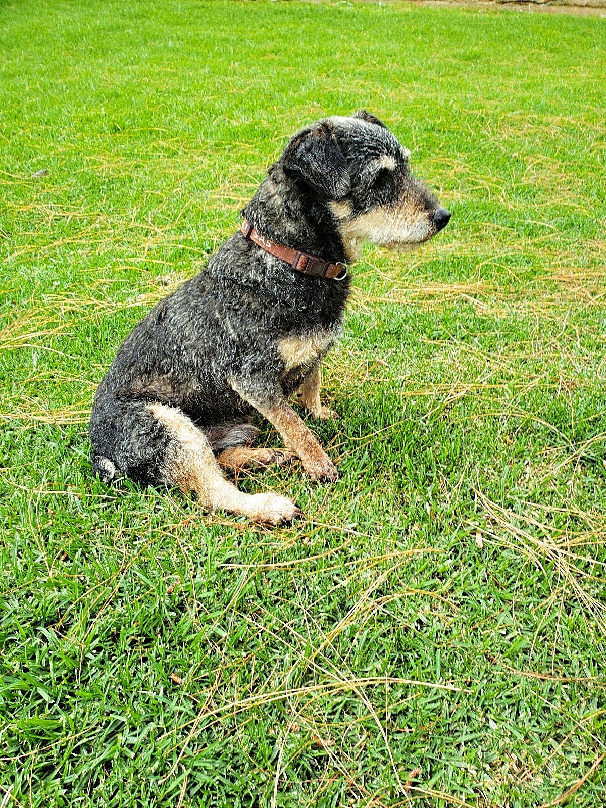 Hond uit het gips