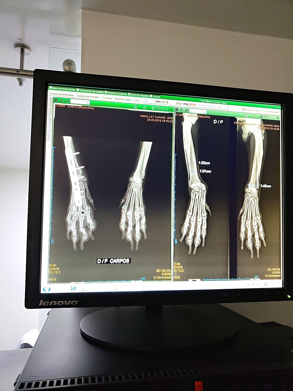 Röntgenfoto hond