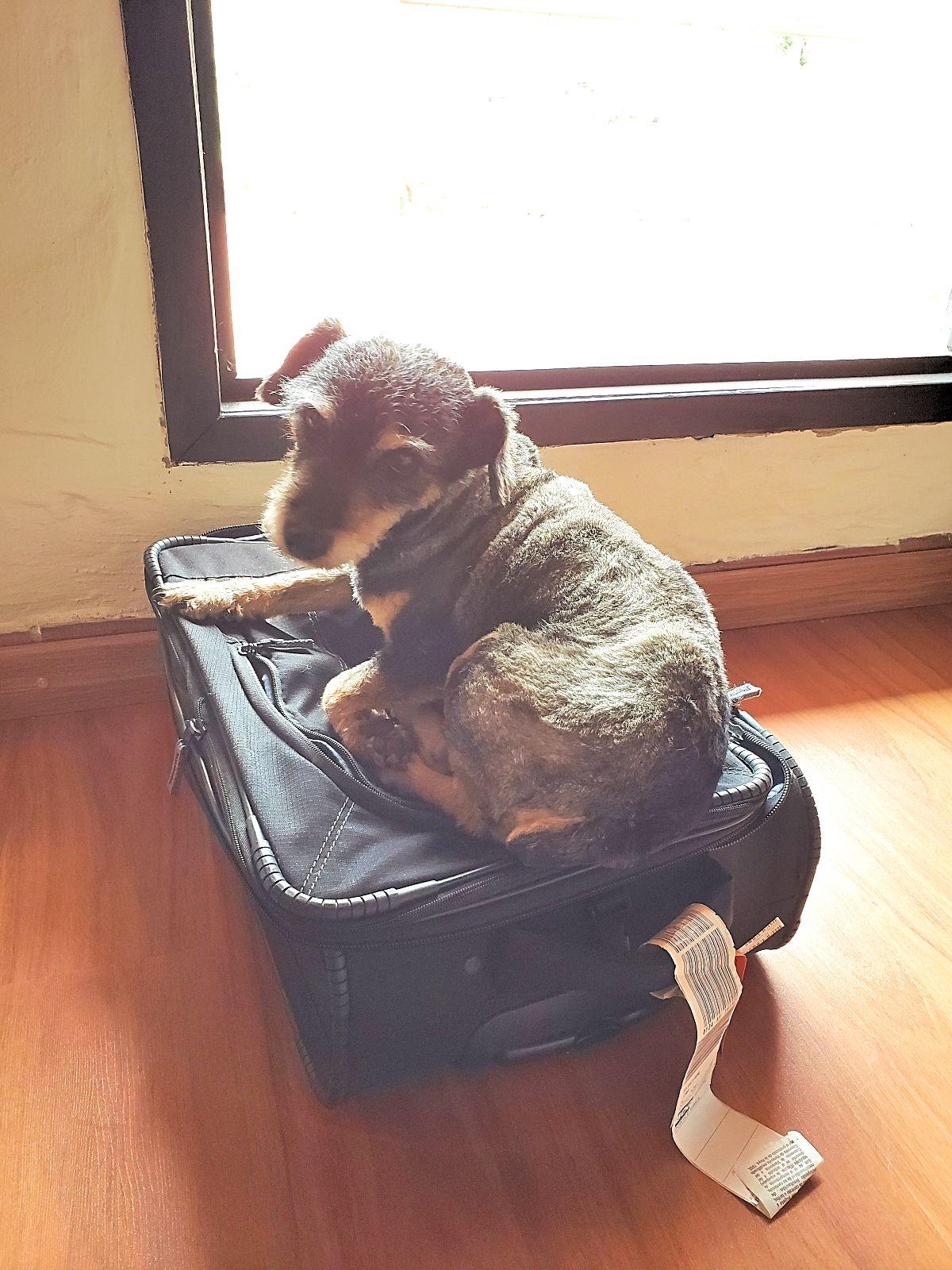 Reizen met de hond
