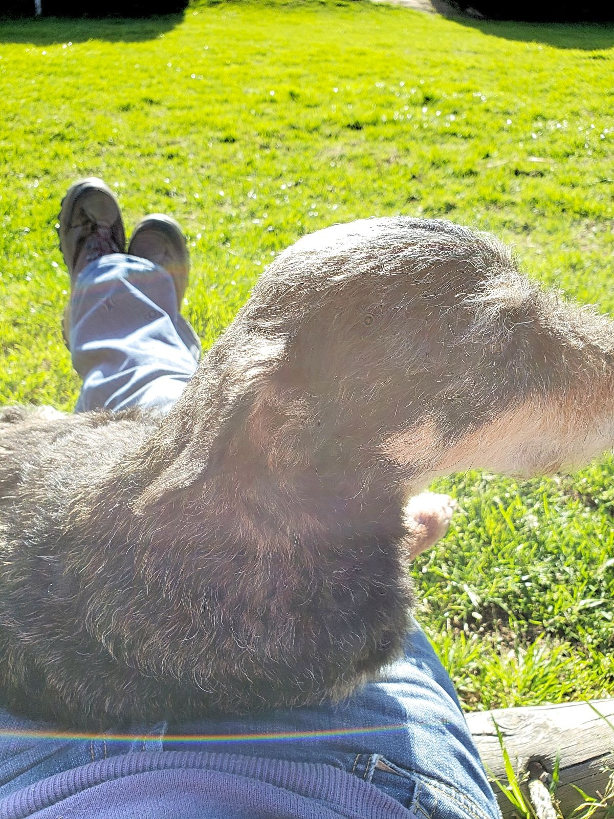 Zonnen met de hond