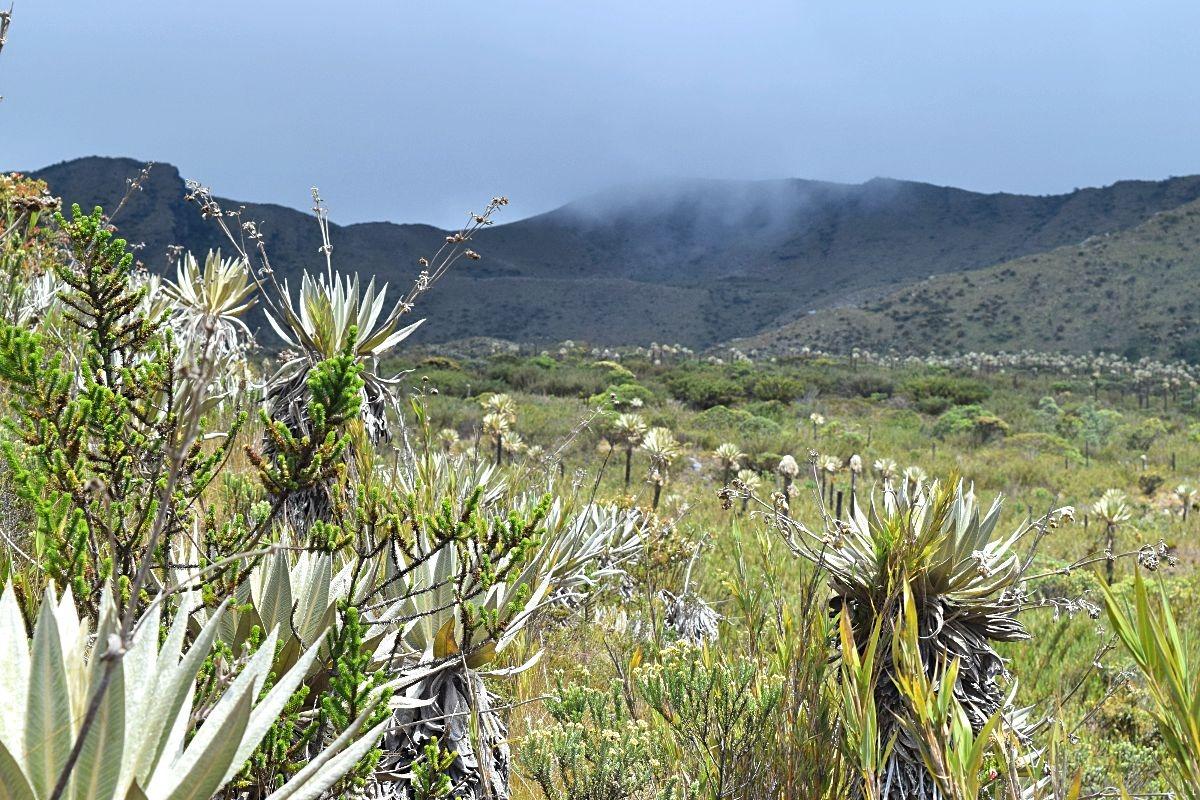 Hiken in Colombia - National Park Chingaza - Lagunas de Siecha