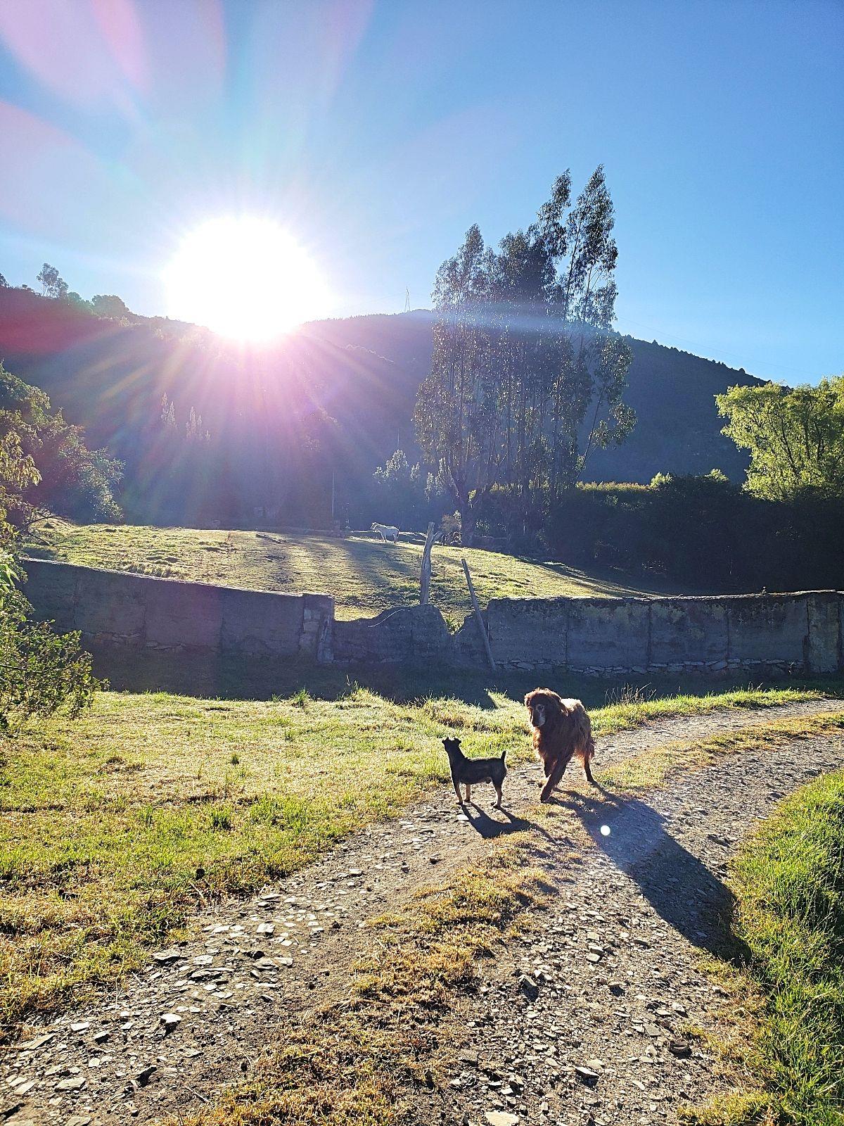 Zon in Colombia finca