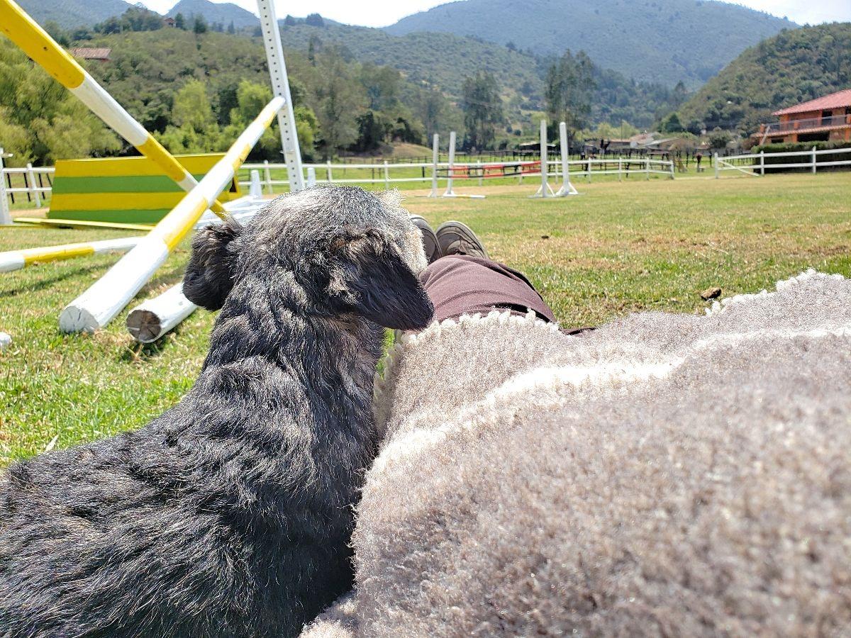 Honden in Colombia