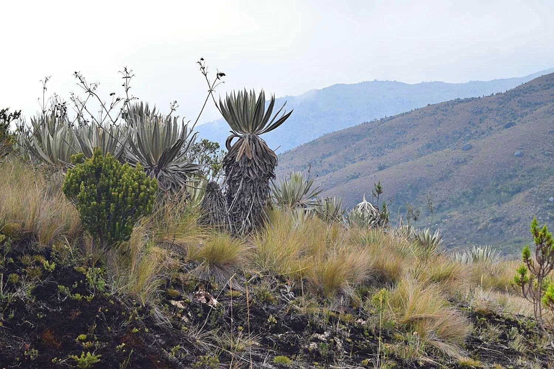 Nationaal Park Chingaza Colombia - hiken naar Lagunas de Buitrago