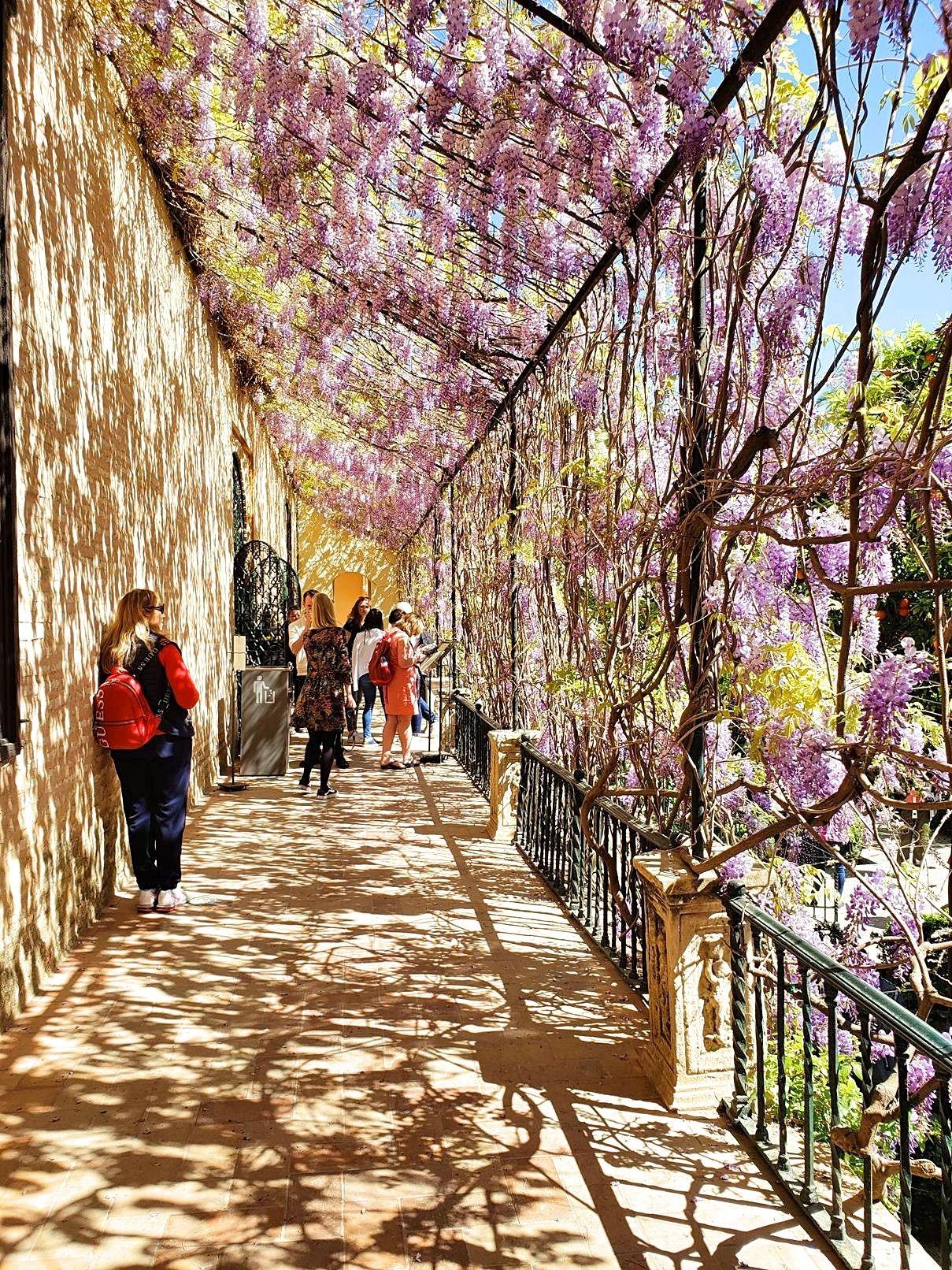 Stedentrip Sevilla bloemen